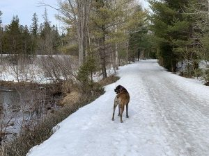 Walking the Dog on the trail south of Orillia
